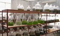 Algae production in China